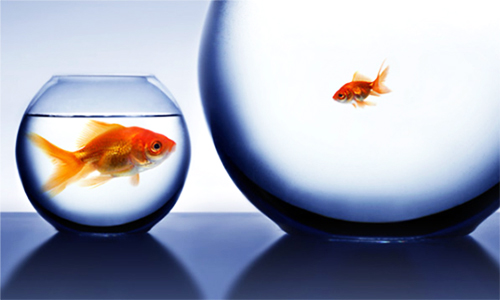 life is not fair: big fish in small bowl, little fish in big bowl