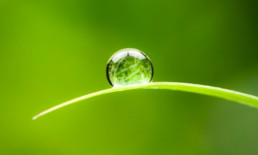 the basics - water droplet on blade of grass - The Best Advice So Far