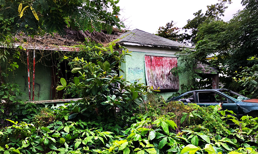 A dilapidated home inland Bahamas has trees crashed through the roof; overgrown bushes and vines strangle the house and junk car.