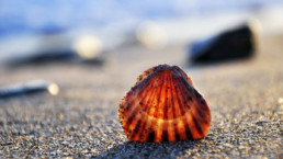 little big things - scallop shell in sand on a sunny beach - The Best Advice So Far