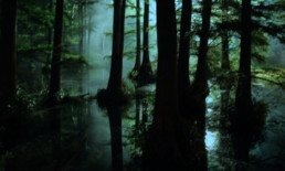 The Best Advice So Far - peepers - woodland wetlands in moonlight